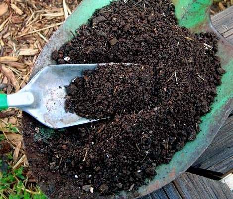 Pupuk Organik Kompos Dari Sah pupuk organik untuk pertumbuhan tanaman