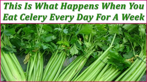 Which Do You Eat by This Is What Happens When You Eat Celery Every Day For A