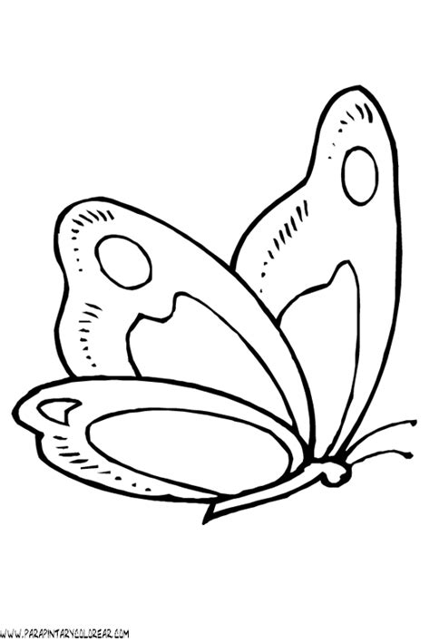 imagenes de mariposas animadas para colorear dibujos de mariposas para colorear y pintar para nios