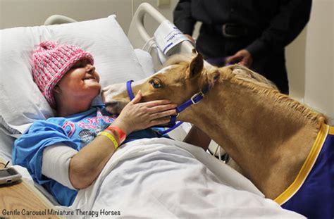 therapy colorado research lacking on animal therapy for hospital patients