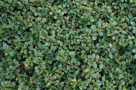 welche pflanzen brauchen wenig sonne 4289 welche pflanzen brauchen wenig sonne welche pflanzen