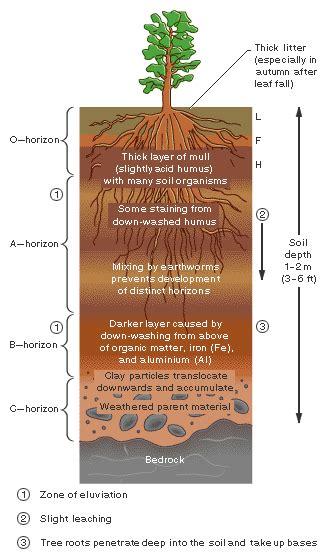 diagram of a soil profile soil profile diagram for school www pixshark