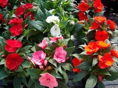 piante di vetro fiori fiori di vetro foto pourfemme