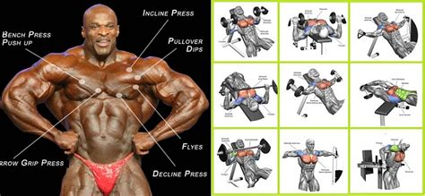 best workout for best chest exercises for developing muscular pecs