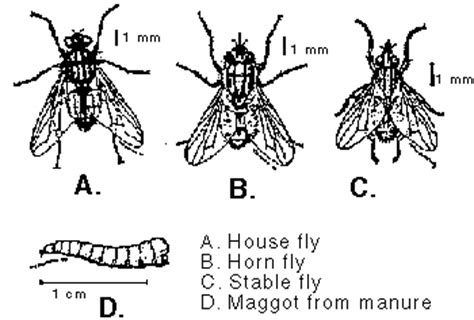 horse flies in house horse arthropod pests