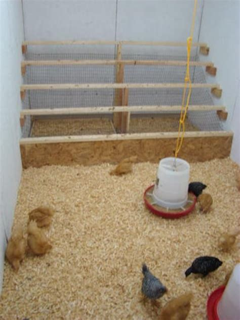 chicken coop roost design woodworking projects plans