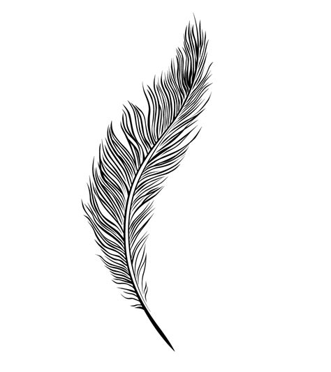 feather clipart simple feather pencil and in color