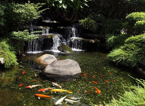 fish for backyard ponds types of fish for garden ponds backyard design ideas