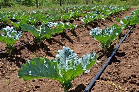 Garden Drip Irrigation by