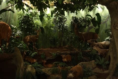 printable forest diorama best photos of printable rainforest backgrounds jungle
