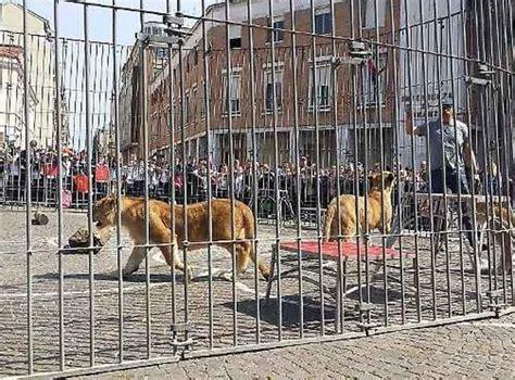 mi sento in gabbia gabbia di leoni in piazza a scelta fa