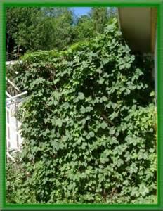 Summer Plants For Garden - kl 228 tterv 228 xter