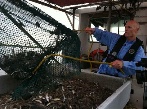 fishing boat jobs florida governor scott gets to work as shrimp boat striker