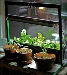 indoor vegetable garden httplometscom