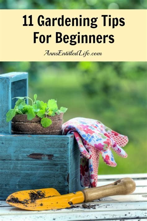 Gardening Ideas For Beginners 50 Tips And Hacks To Help Improve Gardening Page 2 Of 2