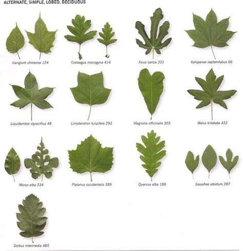 leaf pattern recognition michigan tree identification by leaf identify trees by