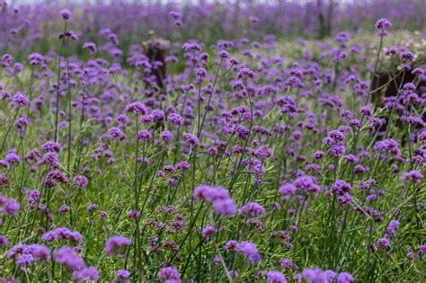 Ameisennester Im Rasen Entfernen 3543 by Gift Gegen Unkraut Weniger Gift Mit Df Statt Pestizid