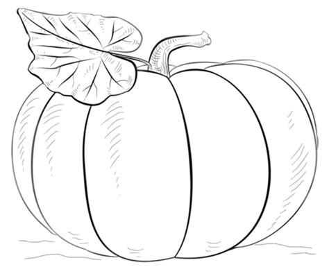 small pumpkin coloring pages print coloriage citrouille coloriages 224 imprimer gratuits