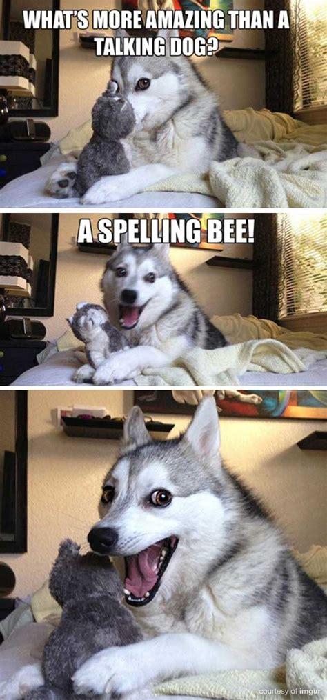 Husky Meme - husky puppy meme pictures to pin on pinterest pinsdaddy