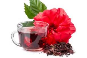 Jamaica Flower Tea - gallery for gt hibiscus tea