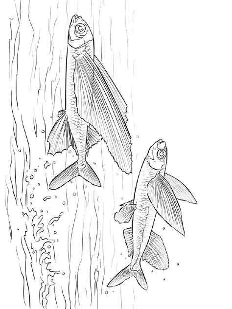 herring fish coloring page flying fish coloring pages download and print flying fish