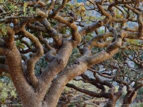 socotra photo gallery pictures more from national geographic magazine