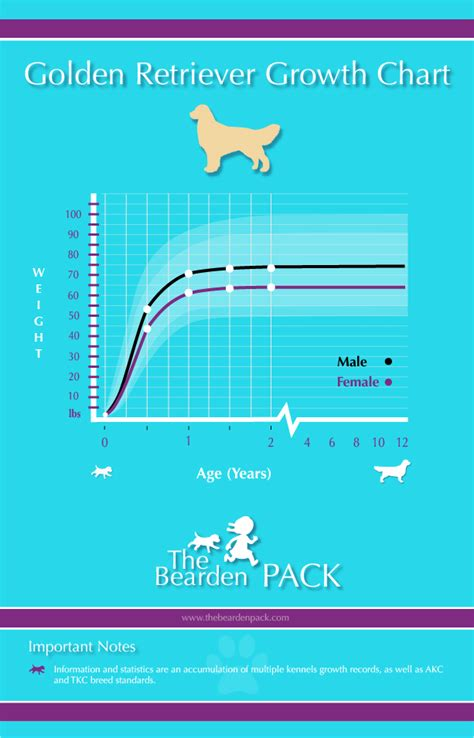 golden retriever growth chart golden retriever growth chart the bearden pack the bearden pack
