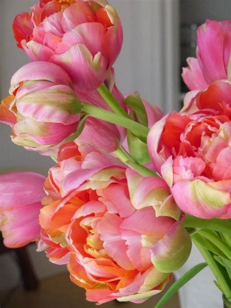 Anting Earing Bird Tulip Flower Bunga Tulip 175 best images about tulips on tulip princesses and the nights