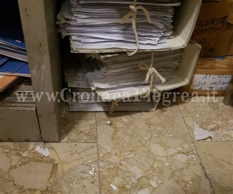 comune di pozzuoli ufficio anagrafe quarto topi al comune documenti rosicchiati dai
