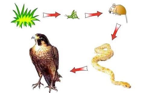 cadenas troficas que significa cadena alimenticia definici 243 n tipos elementos