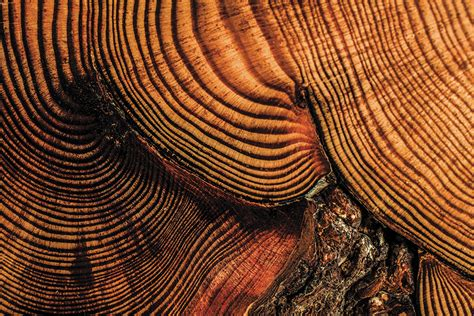 tree ring if trees could talk mizzou magazine