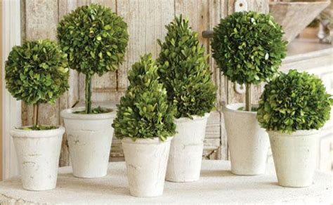 boxwood topiary traditional indoor pots and planters