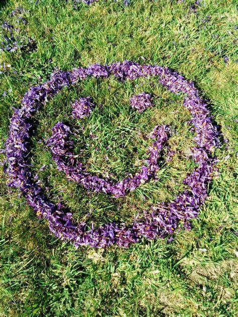Tas Safron 1000 images about tas saff on tasmania organic farming and saffron flower