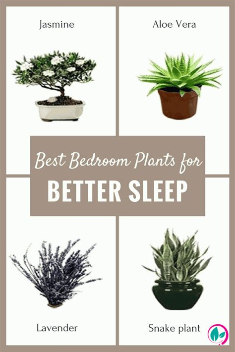 best bedroom plants best plant to have in bedroom my web value