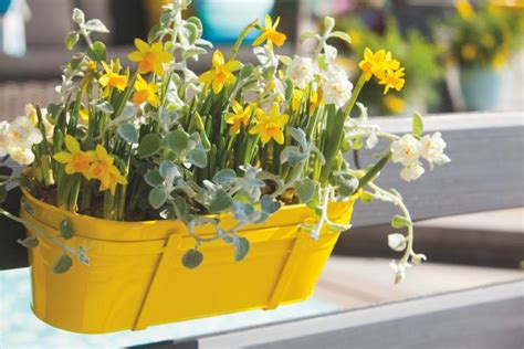 Daffodil Planter by What To Do With Easter Bulbs Diy Network Made