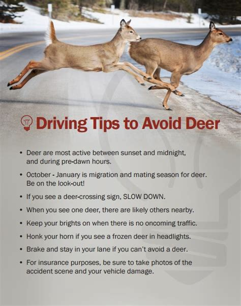 Driving Tips to Avoid Deer Claims   G A MacDonald Associates