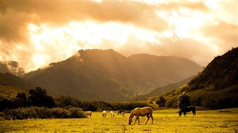 wallpaper hd 1920x1080 horses horses on the field walldevil