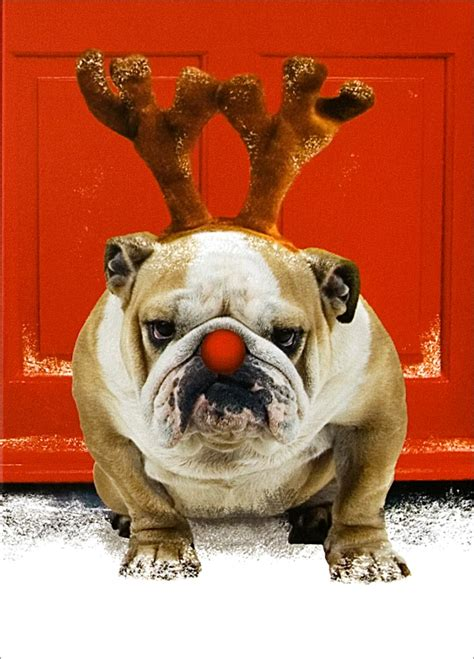 christmas bulldog wallpaper wallpapersafari