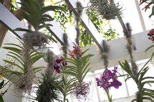 The Orchid Show Chandeliers Most Popular In New York Museums Time Out New York