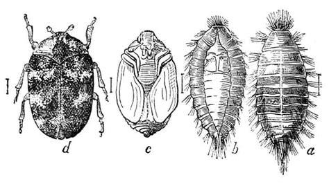 Do Termite Larvae Move