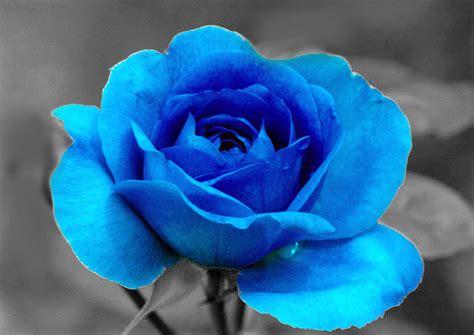 17468 Blue Flowers 2 Warna nick oakden flowers of the world