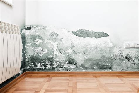 how to get rid of mold on walls in bedroom how to get rid of mold on walls in your home or business