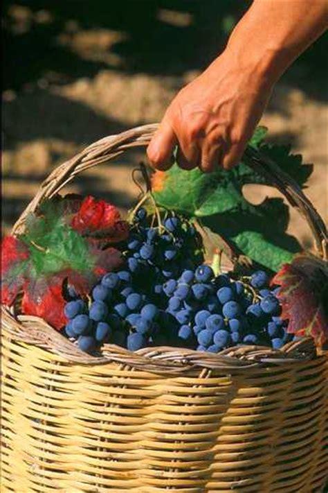 solfiti mal di testa il vino biologico senza solfiti di ferraro la cassa il