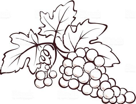 Immagini Di Uva by Grappolo Di Uva Illustrazione 154237842 Istock