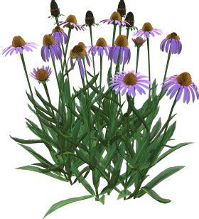 cespuglio con fiori viola fiori azzurri viola lilla page 2