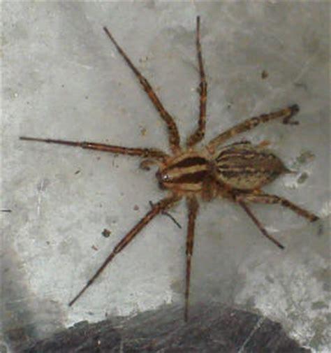 rid  bed bug bite scars fast black spider identification michigan  lice spray