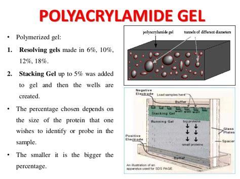 Mba Crosslinker Percentages In Acrylamide Gel by Immunoblotting Techniques