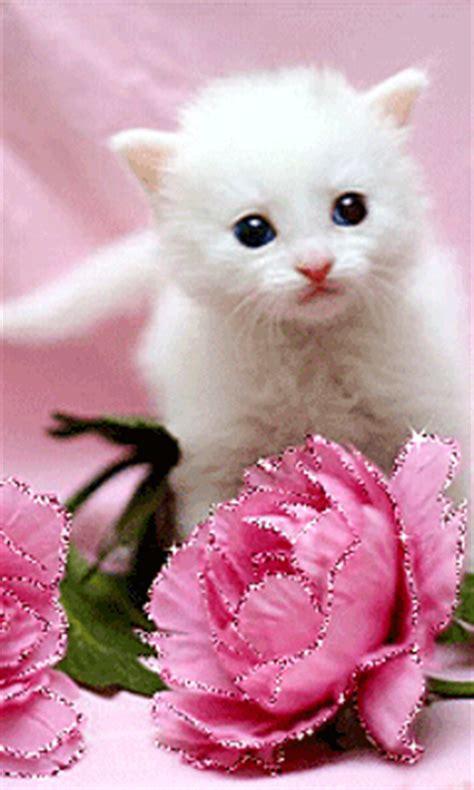 imagenes rosas hermosas brillantes im 225 genes animadas de lindos gatitos con detalles y gestos