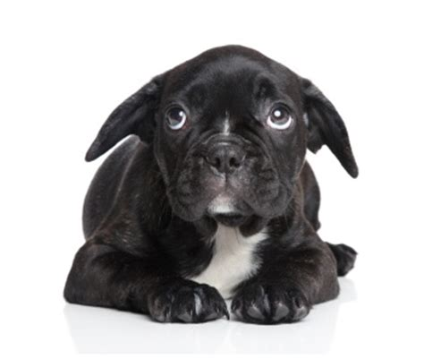 scared puppy 10 effective ways to help our dogs feel safe smart animal systems