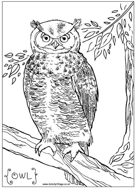 free coloring pages of birds of prey birds of prey coloring pages bestofcoloring com